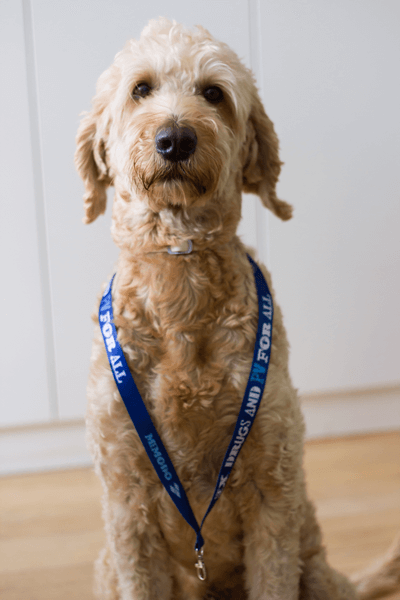 memodo-buerohund